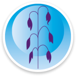 5 Wiersum-iconen-haver