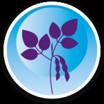 9 Wiersum-iconen-peulvruchten