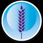 Wiersum-iconen-Tarwe-DEF